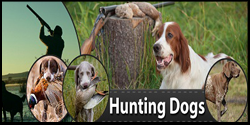 Huntingdogsus